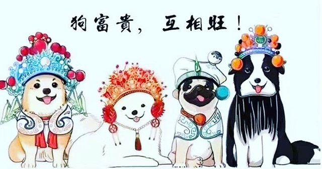 Happy Chinese New year, The year of doggy :) 祝福大家新年快乐,狗年吉祥如意,旺旺旺